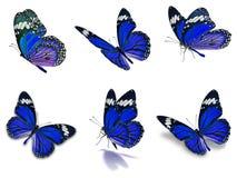 Seis borboletas de monarca ajustadas Imagem de Stock