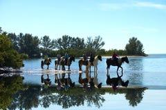 seis cavalos na água com reflexão Foto de Stock