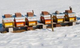 Seis colmeias durante o inverno imagens de stock