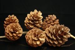 Seis conos del pino Imagenes de archivo