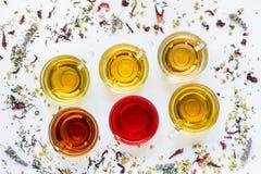 Seis diversos tipos de té se prepararon en las tazas, líneas diagonales Imagen de archivo libre de regalías
