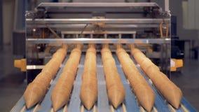 Seis fileiras dos cones do waffle introduzidos em se estão movendo-se lentamente ao longo da correia transportadora filme