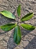 Seis hojas Fotografía de archivo
