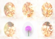Seis huevos de Pascua con la flor Fotos de archivo