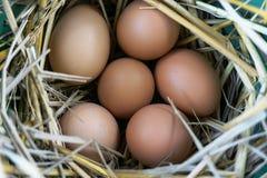 Seis huevos en la cesta de la paja Foto de archivo libre de regalías