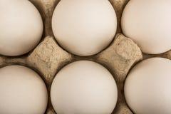 Seis huevos en una bandeja para el aislante de diez huevos Imágenes de archivo libres de regalías