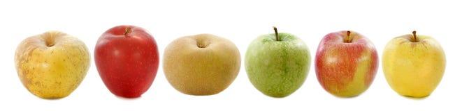 Seis maçãs Imagens de Stock Royalty Free