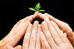 Seis manos alrededor de la pequeña planta de semillero Imágenes de archivo libres de regalías