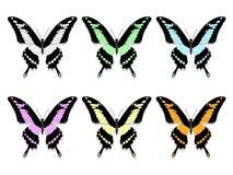 Seis mariposas con las alas negras y los modelos abigarrados Fotografía de archivo libre de regalías