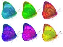Seis mariposas en aislado Foto de archivo libre de regalías