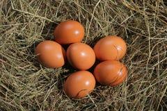 Seis ovos que encontram-se em um feno Tema da Páscoa ou da vila fotos de stock