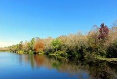 Seis pântanos de Cypress da milha, Florida Fotografia de Stock Royalty Free