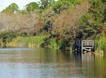 Seis pântanos de Cypress da milha, Florida Imagens de Stock Royalty Free