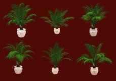Seis palmas en conserva 3d CG Imagenes de archivo