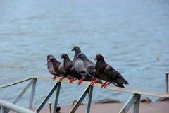 Seis palomas Fotos de archivo