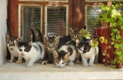 Seis pequeños gatos imagen de archivo libre de regalías
