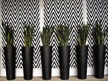 Seis plantadores pretos na parede preto e branco Fotos de Stock Royalty Free