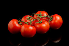 Seis tomates no preto fotografia de stock
