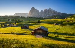 Seiser Alm Alpe di Siusi with Langkofel mountain at sunrise in stock image