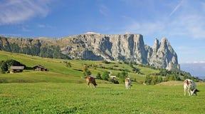 Seiser Alm con la montagna di Schlern, Tirolo del sud, Italia Immagini Stock