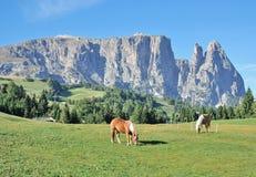 Seiser Alm e Schlern, Tirolo del sud, Italia Fotografie Stock