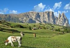 Seiser Alm, montagna di Schlern, Tirolo del sud, Italia Fotografie Stock Libere da Diritti