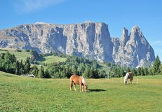 Seiser Alm och Schlern, södra Tyrol, Italien Arkivfoton