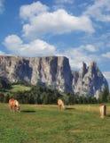 Seiser Alm Schlern i góra, Południowy Tirol, Włochy fotografia stock
