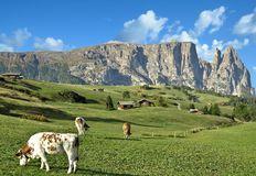 Seiser Alm,Schlern Mountain,South Tirol,Italy Royalty Free Stock Photos