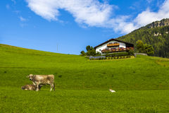 Seiser Alm Royalty Free Stock Images