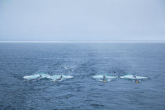 Seismic airguns. Working marine seismic air gun subarray Royalty Free Stock Photos