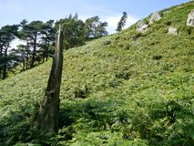 Seite des Hügels mit sonderbarem Baum bleibt Stockbild