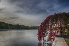 Seite des Teichs Stockfotografie