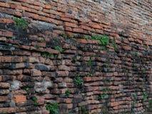Seitenansicht der alten Backsteinmauer mit grünen Unkräutern Lizenzfreie Stockfotografie