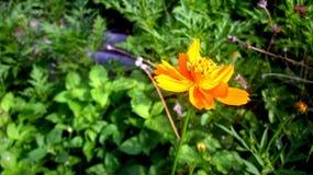Seitenansicht der orange Farbblume Stockfoto
