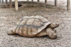 Seitenansicht der Schildkröte Stockfotografie