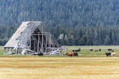 Seitenansicht des Landes und Ackerland mit Kühen in Oregon und in Washington USA Stockbilder