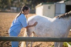Seitenansicht des Untersuchungspferds des weiblichen Tierarztes mit Stethoskop lizenzfreie stockfotos