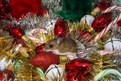 Seitenansicht einer wilden braunen Hausmaus, Mus-Musculus, gehockt auf einer roten Weihnachtskugel mitten in einem Stapel von Dek Lizenzfreies Stockbild