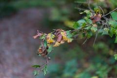 Seitenansicht eines Blattes im Wald, der vom Baum hängt Stockbild
