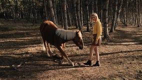 Seitenansicht von jungen weiblichen Trainer traines das schöne braune Pferd mit der weißen Mähne in der hölzernen Zeitlupe stock video