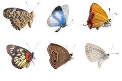 Seitenansichtsammlung des Schmetterlinges Stockfotos
