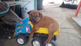 Seitenhund Lizenzfreies Stockbild