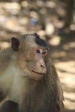 Seitenprofil-Affe-Gesicht Lizenzfreies Stockfoto