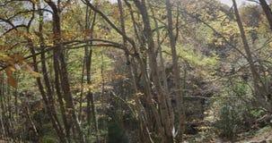 Seitliche Bewegung der Kamera Bäume und ein Weg am Ende zeigend stock video