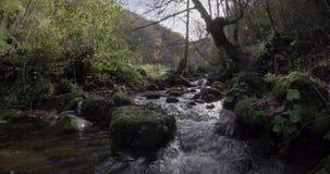 Seitliche Bewegung des Kurses von einem kleinen Fluss zwischen Bäumen stock video