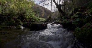 Seitliche Bewegung des Kurses von einem kleinen Fluss zwischen Bäumen stock footage