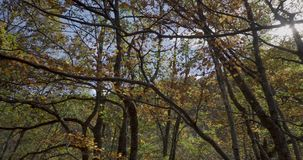 Seitliche Bewegung mit Niederlassungen und Blättern von Bäumen nah an uns und der Sonne an der Spitze stock footage