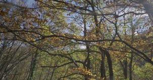 Seitliche Bewegung mit Niederlassungen und Blättern von Bäumen nah an uns und der Sonne an der Spitze stock video footage