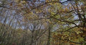 Seitliche Bewegung mit Niederlassungen und Blättern von den Bäumen sehr nah zu uns stock video footage